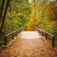 Pont dans la la forêt de Grésigne