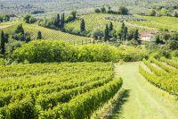 Vignes près de Terra Vecchia