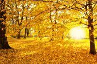 feuilles et arbres de couleur jaunes dans la forêt Domaniale de Brotonne
