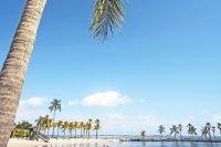 Palmiers de Key Biscayne