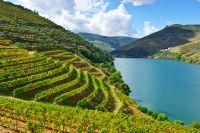 Vignes de la vallée du Douro