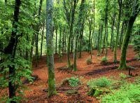 À l'intérieur de la foret du Parc naturel régional du Morvan